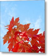 Autumn Landscape Fall Leaves Blue Sky White Clouds Baslee Metal Print