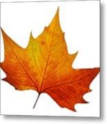 Autumn Leaf 1 Metal Print