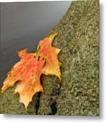 Autumn Leaf Study Metal Print