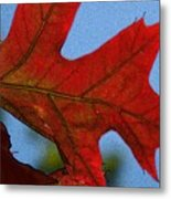 Autumn Leaves 18 Metal Print