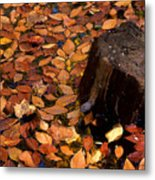 Autumn Leaves And Tree Stump Metal Print