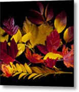 Autumn Leaves Metal Print by Barry C Donovan