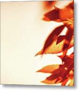 Autumn Leaves Border Metal Print