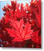 Autumn Leaves Fall Art Bright Red Leaves Baslee Troutman Metal Print