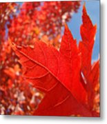 Autumn Leaves Fall Art Red Orange Leaves Blue Sky Baslee Troutman Metal Print