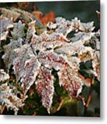Autumn Leaves In A Frozen Winter World Metal Print