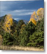 Autumn Leaves In Hart Prairie Metal Print