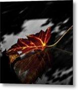 Autumn Leaves... Metal Print