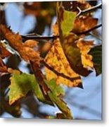 Autumn Leaves Macro 1 Metal Print