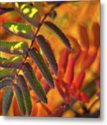 Autumn Leaves - Patagonia Metal Print