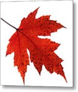 Autumn Leaves Triptych Metal Print