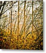 autumn Lines Metal Print