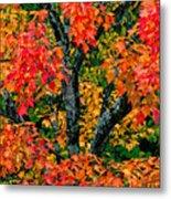 Autumn Maple Bark Metal Print