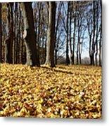 Autumn Maple Forest - Massachusetts Usa Metal Print