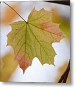 Autumn Maple Leaf Vertical Metal Print