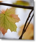 Autumn Maple Leaves Horizontal Metal Print