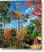 Autumn Maples Metal Print