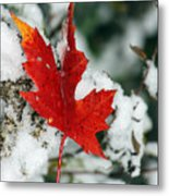 Autumn Meets Winter Metal Print