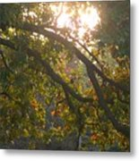 Autumn Morning Glow Metal Print