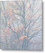 Autumn Morning Sugar Maple Metal Print