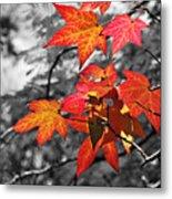Autumn On Black And White Metal Print