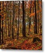 Autumn On The Ice Age Trail Metal Print