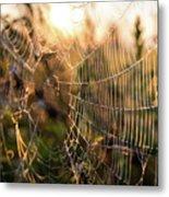Autumn Orb Weaver Metal Print
