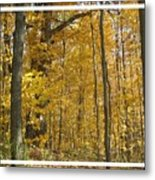 Autumn Out My Window Metal Print