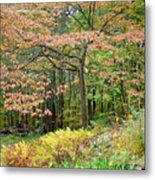 Autumn Paints A Dogwood And Ferns Metal Print
