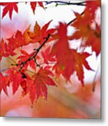 Autumn Pastel Metal Print
