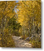 Autumn Path Metal Print by Andrew Soundarajan
