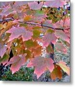 Autumn Pink 2 Metal Print