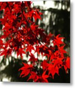 Autumn Red Metal Print by Jeff Breiman