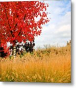 Autumn Red Maple Metal Print