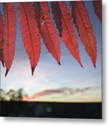 Autumn Red Sumac Leaves Metal Print