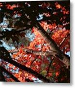 Autumn Red Trees 2015 02 Metal Print