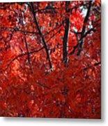 Autumn Red Trees 2015 Metal Print