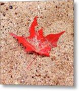 Autumn Sand Metal Print