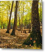 Autumn Scenery Metal Print