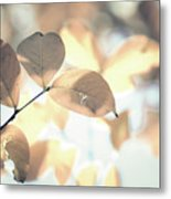 Autumn Season Leaves On A Tree In Sun Light Metal Print