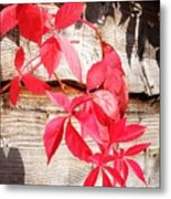 Autumn Shadows Metal Print