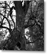 Autumn Spook In Black And White Metal Print