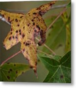 Autumn Spotted Metal Print