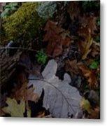 Autumn Still-life Metal Print