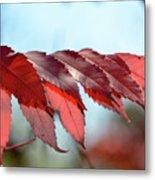 Autumn Sumac Metal Print