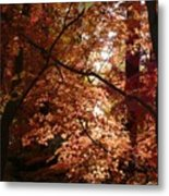 Autumn Sunshine Poster Metal Print