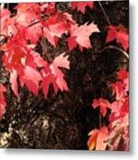 Autumn Surprise Metal Print