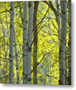 Autumn Through The Trees Metal Print