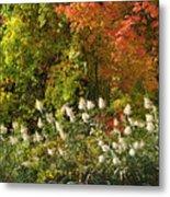 Autumn Tranquility 3 Metal Print
