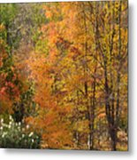 Autumn Tranquility 4 Metal Print
